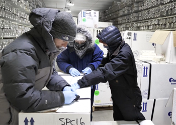 Scientists package ice cores inside the freezer at the National Ice Core Laboratory